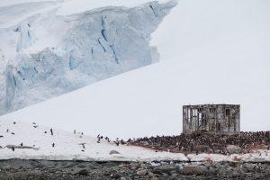 Antarctica penguin nature