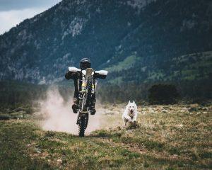 dirt bike and dog