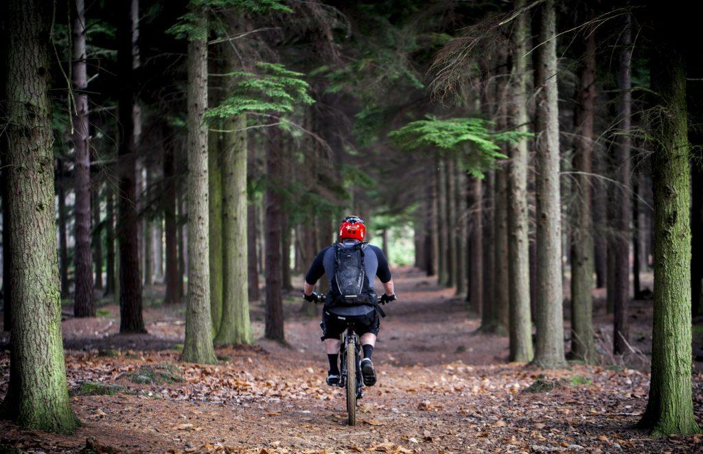 mountain biking forest
